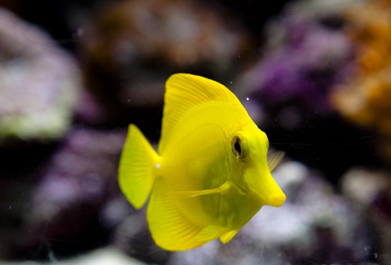 Aquarium center dal 1975 a ravenna pesci d 39 acqua dolce for Animali laghetto